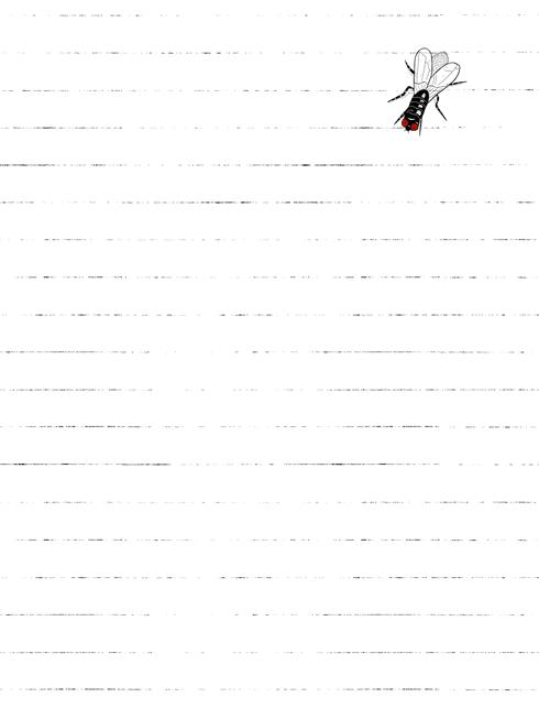 332-2009-06-01-fly